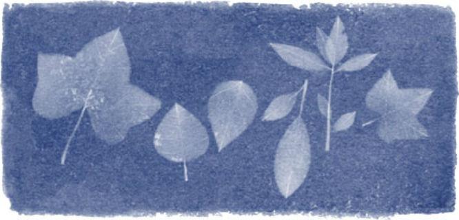 Google Doodle Anna Atkins (sumber: Google)