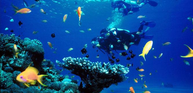 Ilustrasi (foto: toptenz.net)
