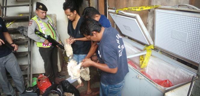 Gudang ayam tiren di Pulogadung (foto: Kompas)