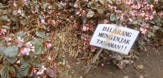 Kebun Raya Baturraden (foto: Detikcom)