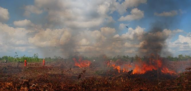 Ilustrasi kebakaran hutan (foto: wwf.or.id)