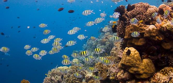 Taman Laut Bunaken (foto: indonesiaexplorer)