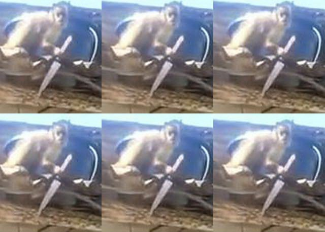 Monyet Ngamuk Bawa Pisau Dapur (foto: Youtube - Jozivan Antero)