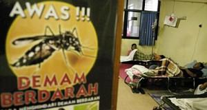 Ilustrasi demam berdarah (foto: Tempo)