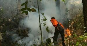 Gunung Ciremai Terbakar (foto: Tempo)