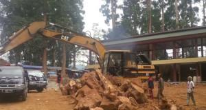 Belasan Pohon di Taman Nasional Ditebang, Warga Pangrango Protes (foto: Kompas)