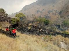 Hutan di Pulau Komodo Terbakar (foto: Kompas)