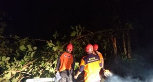 Angin Puting Beliung Robohkan Pohon di Boyolali (foto: Kompas)